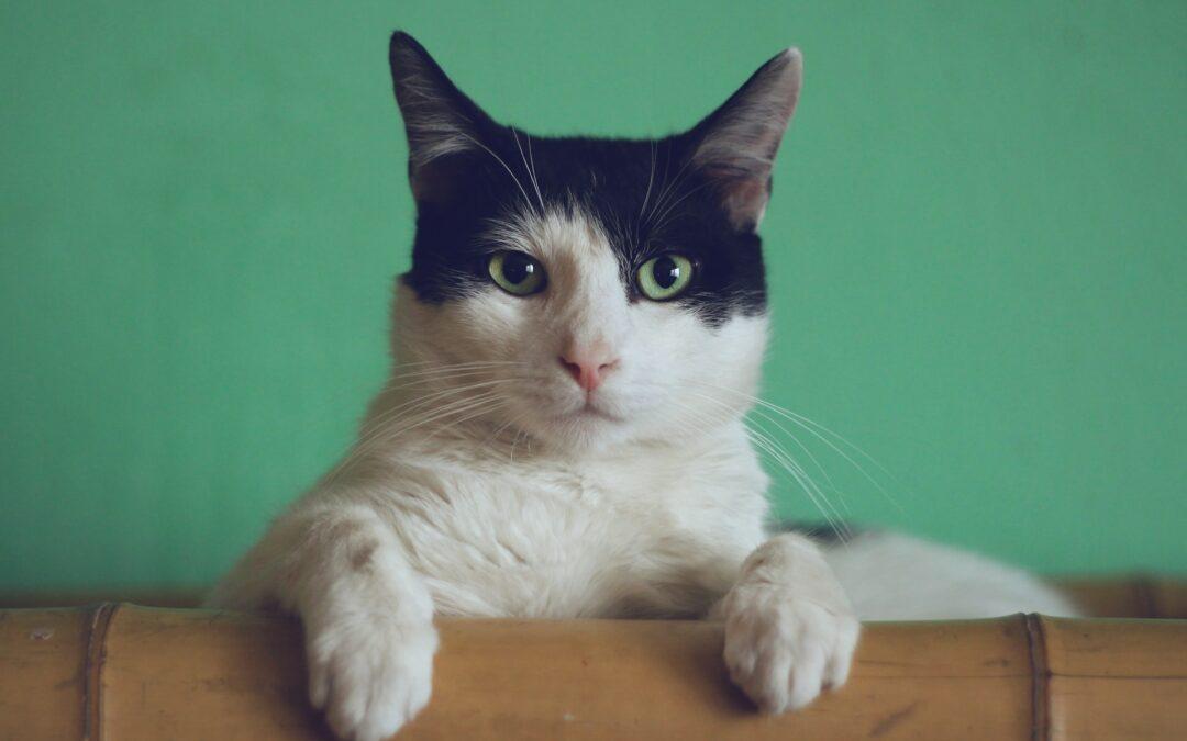 Dlaczego twój kot potrzebuje drapaka
